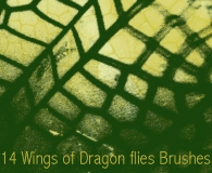Dragon Fly Wing Brushes