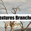 Textures Branches