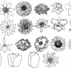 Flower drawing brushes