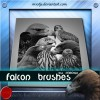 Falcon brushes