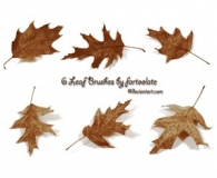 Realistic brushes of Leaves
