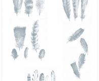 Feathers photoshop brushes