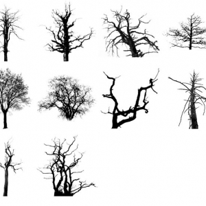 dreary trees brushes